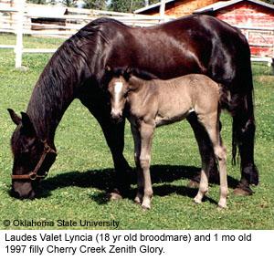 Breeds of Livestock - Canadian Horse